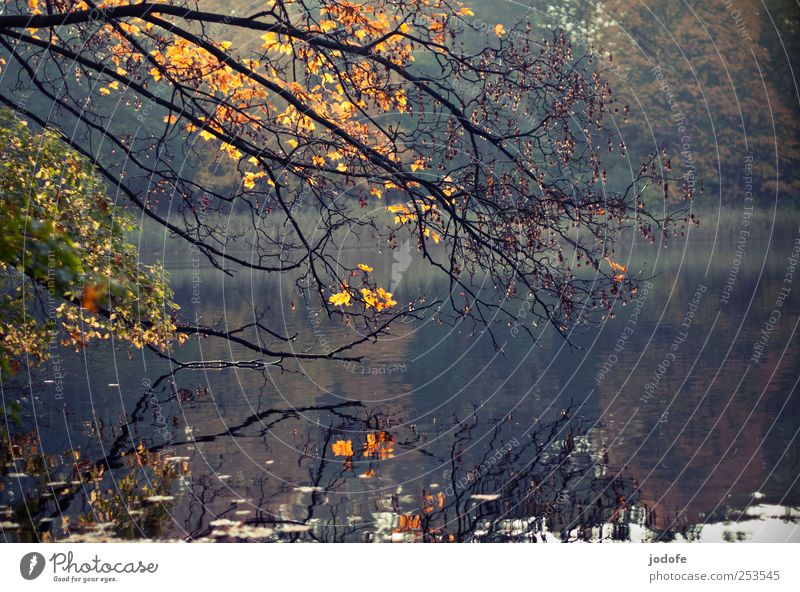 Nature Water Plant Leaf Calm Forest Yellow Autumn Environment Landscape Moody Lake Gold Branch Autumn leaves Bleak
