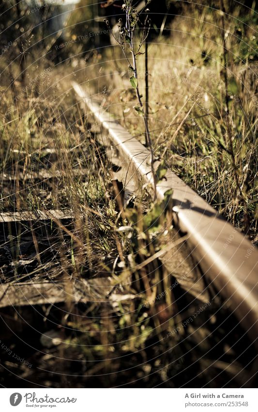 lone railroad Environment Nature Plant Autumn Beautiful weather Grass Bushes Wild plant Weed Old Glittering Faded To dry up Creepy Natural Original Going