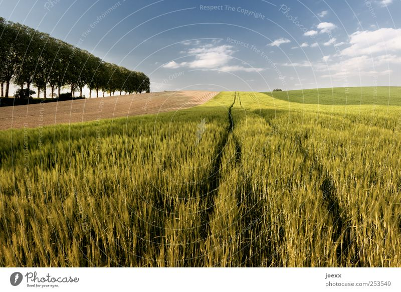Sky Blue Green Tree Summer Clouds Environment Landscape Field Horizon Agriculture Beautiful weather Forestry Grain field Agricultural crop