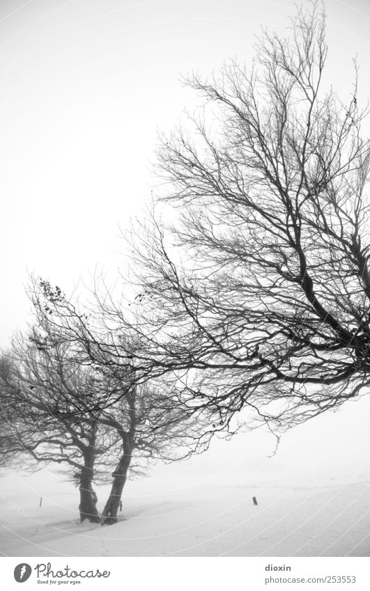 Nature White Tree Plant Winter Black Cold Snow Environment Landscape Ice Fog Natural Frost Branch Tree trunk