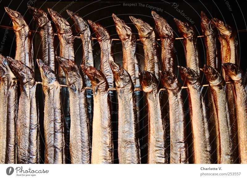 Animal Black Death Food Metal Brown Together Glittering Gold Esthetic Fish Team Illuminate Thin Delicious Fragrance