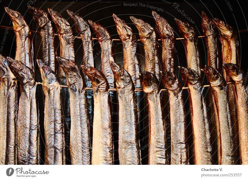 Delicious eel Food Fish Eel Kipper smoked eel Animal Dead animal Flock smoke oven Metal Fragrance Hang Illuminate Esthetic Together Glittering Thin Brown Gold
