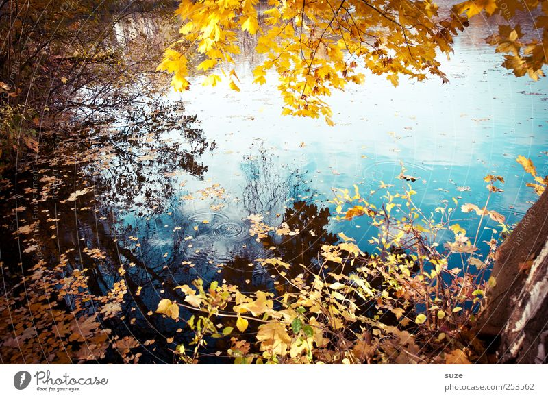 Nature Water Beautiful Tree Leaf Yellow Autumn Environment Landscape Lake Authentic Idyll Lakeside Beautiful weather Treetop Twig