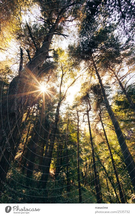 Pine mountain forest in summer season Beautiful Relaxation Meditation Summer Sun Mountain Nature Landscape Plant Autumn Warmth Tree Leaf Forest Hill Peace