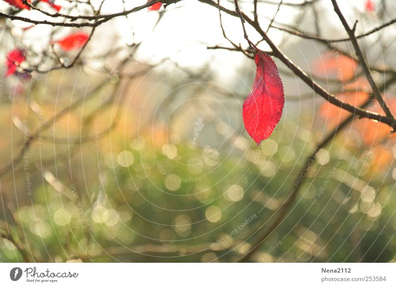 Nature Tree Plant Red Leaf Loneliness Forest Cold Autumn Environment Garden Air Bright Park Weather Wind