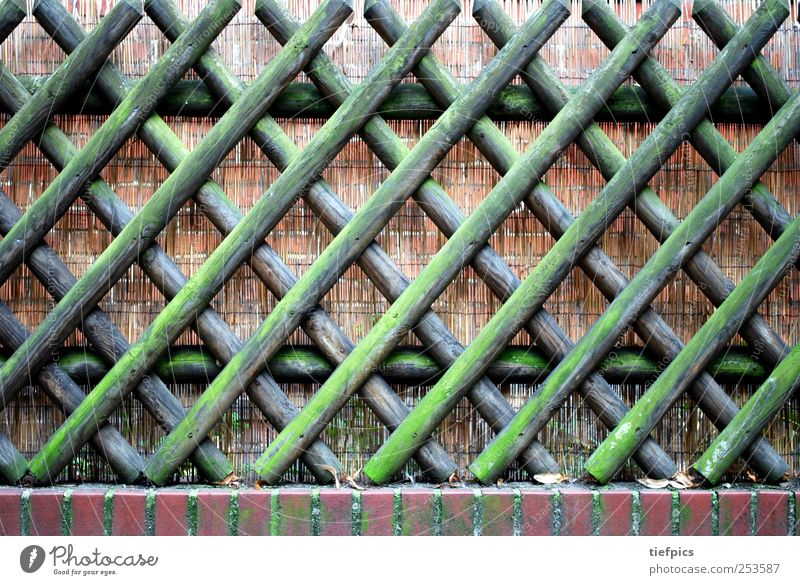Hunter's fence. Moss Wood Brown Green pick German Germany Background picture hunting fence Fence Wooden board mossy Weathered Garden fence Petit bourgeois