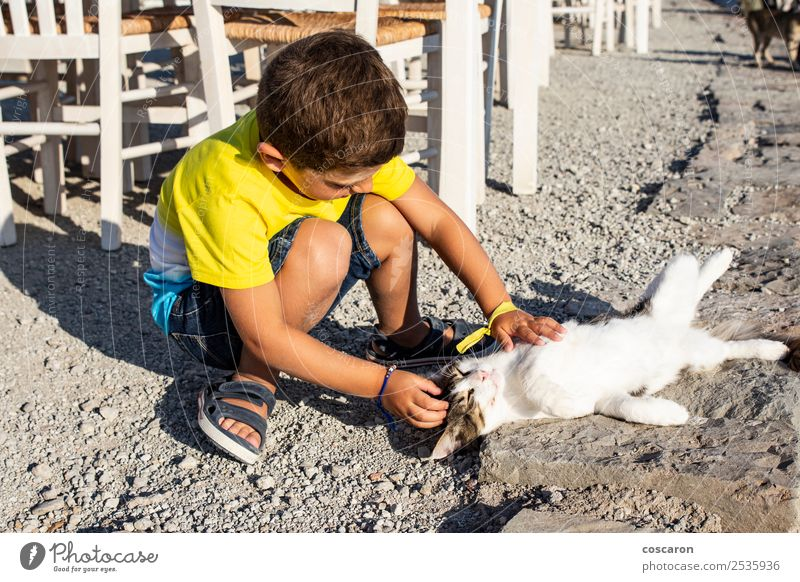 Adorable little boy caressing a cat on the street Cat Child Human being Nature Summer Beautiful Hand Animal Joy Lifestyle Love Emotions Happy Grass Boy (child)