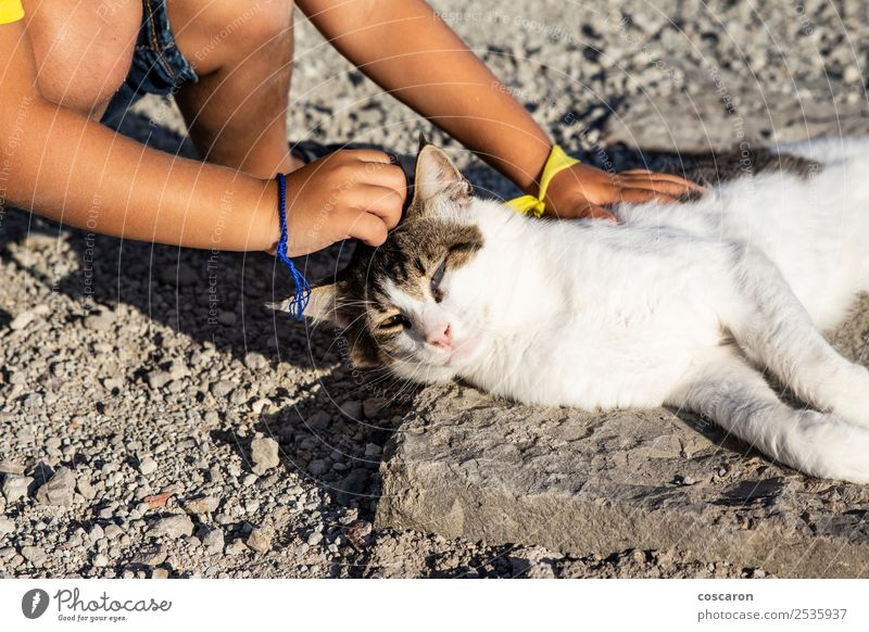 Adorable little boy caressing a cat in the street Lifestyle Joy Happy Beautiful Leisure and hobbies Playing Summer Child Human being Toddler Boy (child)