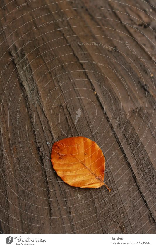Nature Leaf Calm Autumn Line Brown Earth Lie Esthetic Ground Change Uniqueness Illuminate Clean Furrow Autumn leaves