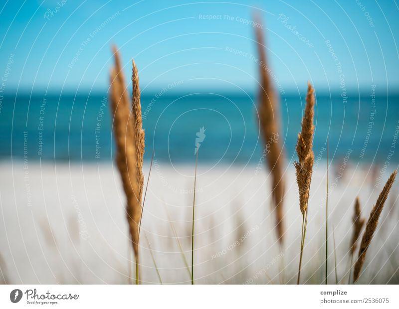 Riverside grass by the sea Beautiful Healthy Vacation & Travel Tourism Summer Summer vacation Sun Sunbathing Beach Ocean Island Waves Environment Nature