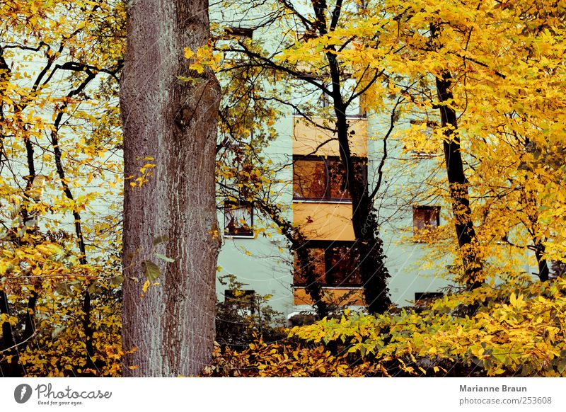 Nature Green Tree Leaf House (Residential Structure) Yellow Colour Autumn Window Gray Building Facade High-rise Seasons Tree trunk Autumn leaves