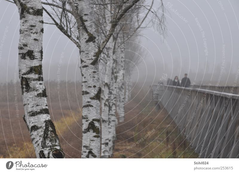 Human being Tree Calm Relaxation Autumn Wood Gray Lanes & trails Sadness Moody Fog Trip Tourism Perspective Future Infinity