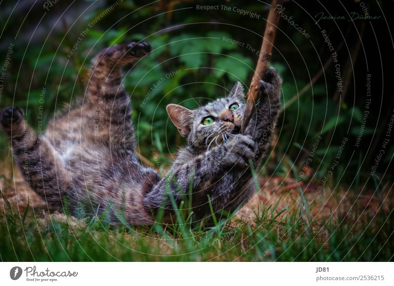 small wildcat Animal Pet Wild animal Cat 1 To hold on Playing Romp Aggression Jump Movement Stick Garden Colour photo Exterior shot Deserted Copy Space right