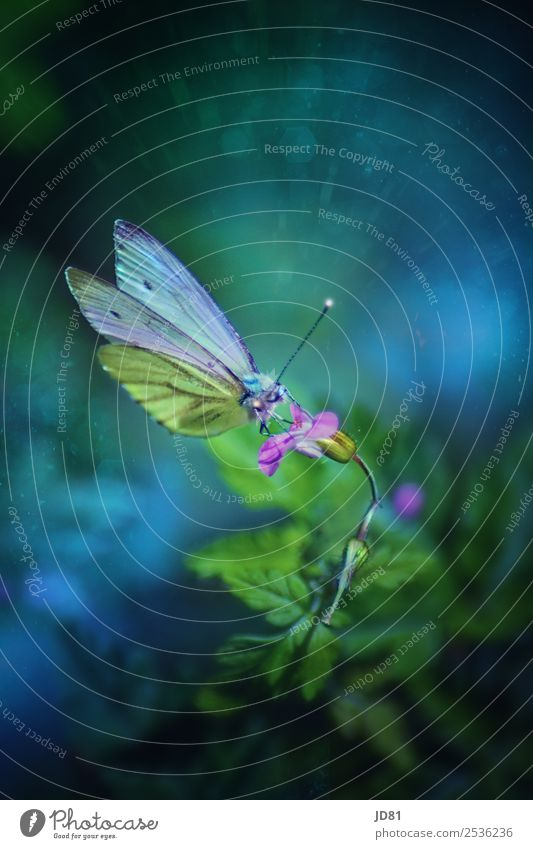Enchanted Beauty Nature Plant Animal Spring Summer Flower Garden Butterfly 1 Blossoming Fragrance Flying Beginning Esthetic Uniqueness Colour Idyll Environment