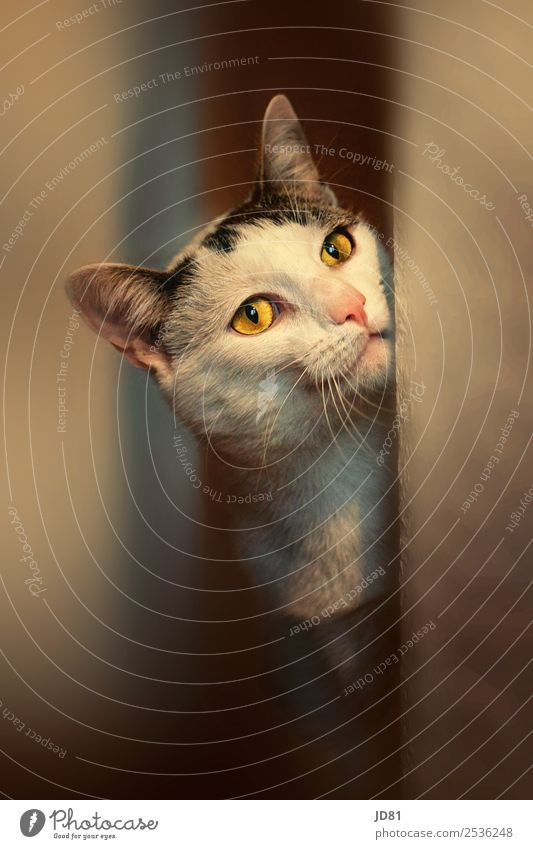 prejokes Pet Cat 1 Animal Observe Dream Playing Curiosity Cute Beautiful Eyes Ambience Colour photo Multicoloured Interior shot Close-up Deserted Copy Space top