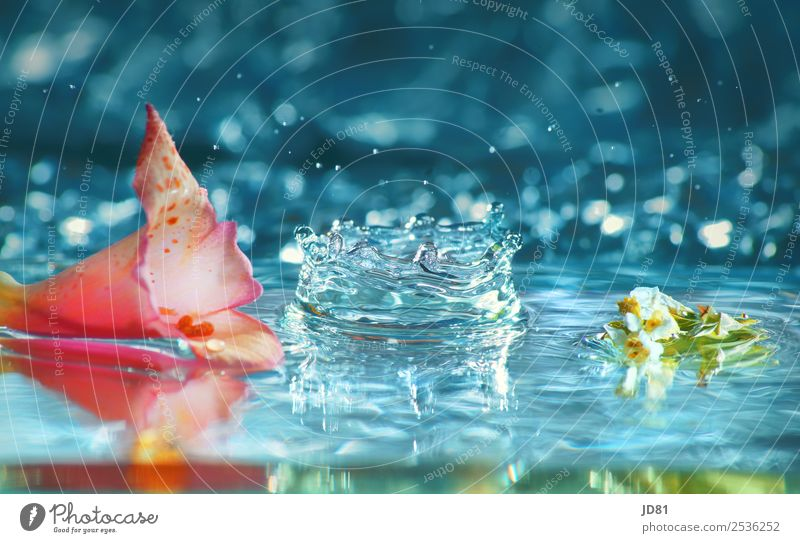 summer blubber Water Drops of water Summer Esthetic Wellness Beautiful Fresh Pure Blossom leave Flower Blue Pink Colour photo Multicoloured Studio shot