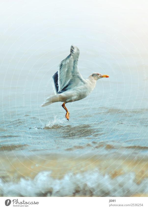 on the upswing Environment Nature Water Cloudless sky Summer Weather Beautiful weather Waves Beach North Sea Animal Bird 1 Effort Movement Relaxation