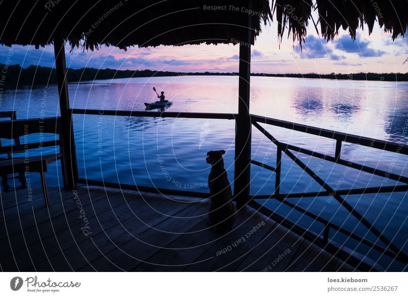 Dog watching girl in canoe at lagoon during sunset Vacation & Travel Tourism Far-off places Summer Sun Beach Ocean Island Waves Aquatics Nature Clouds Sunrise