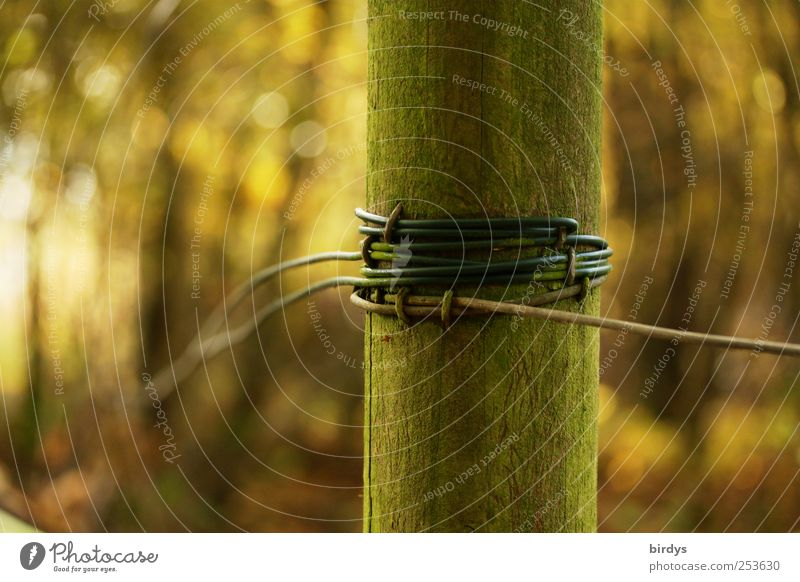 Wrapped Nature Autumn Forest Uniqueness Fence post Wrapped around Wire fence Green mossy green Tense round wood Wooden stake Colour photo Subdued colour
