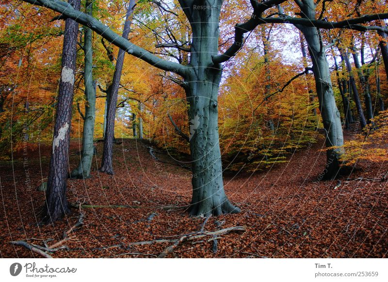 Holy Place Environment Nature Landscape Elements Earth Autumn Tree Leaf Forest Virgin forest Change Colour photo Multicoloured Exterior shot Deserted Day
