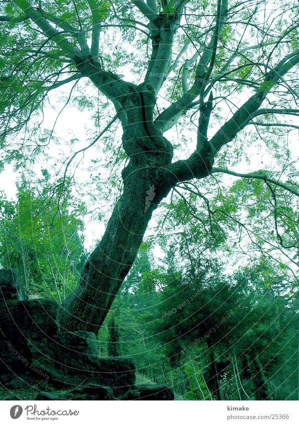 Nature Tree Mexico