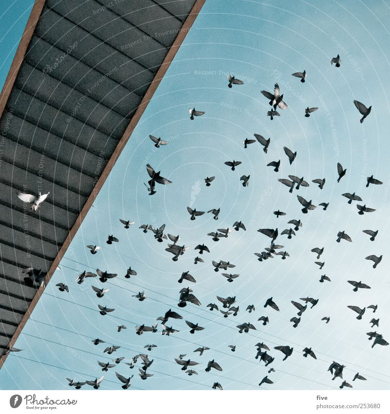 Sky Nature Vacation & Travel Animal Bird Flying Trip Adventure Bridge Group of animals Manmade structures Beautiful weather Sightseeing Cloudless sky Flock