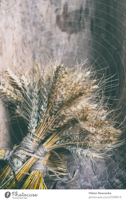 Bundles of ears of cereal plants Nature Summer Plant Sun Yellow Natural Design Decoration Gold Bouquet Farm Harvest Collection Stalk Bread Agriculture