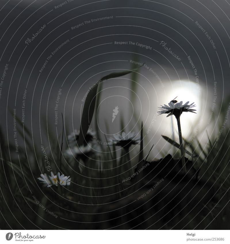 Nature White Plant Flower Calm Black Dark Meadow Autumn Environment Grass Gray Blossom Coast Moody Fog