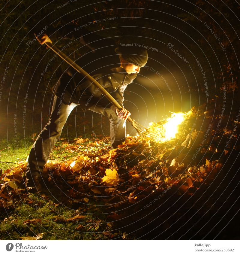 Human being Man Nature Tree Leaf Adults Environment Meadow Autumn Garden Park Lighting Work and employment Masculine Gold Search