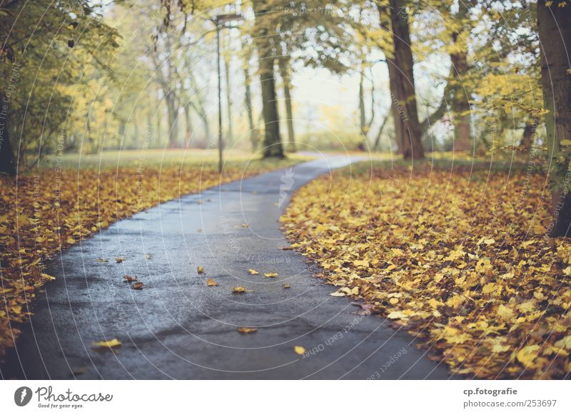 autumn trail Asphalt Lanes & trails Footpath Tree Leaf Autumn Park Street lighting Lighting