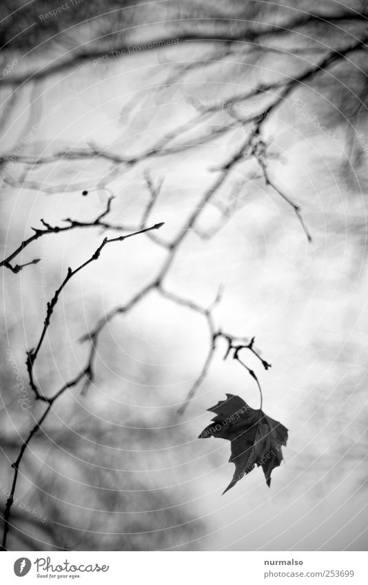 the last Lifestyle Art Nature Plant Animal Leaf Park Forest Hang Faded To dry up Dark Moody Dream Transience Branch Autumn muddled Blur Subdued colour