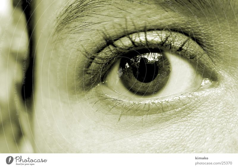 Human being Eyes Mexico