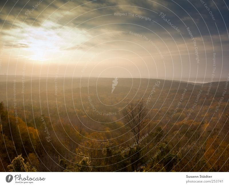 Sky Nature Tree Sun Far-off places Forest Autumn Berlin Landscape Lake Illuminate Enchanting Autumnal colours Wannsee