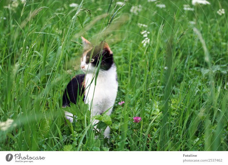 Cat Nature Summer Plant Green Landscape White Flower Animal Black Environment Blossom Meadow Grass Garden Park