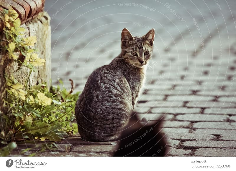 Discover the world together Small Town Street Cobblestones Wayside Animal Pet Cat 2 Pair of animals Observe Sit Wait Brash Free Together Natural Curiosity Cute