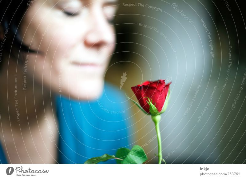 Human being Blue Beautiful Red Face Love Feminine Life Emotions Adults Happy Moody Rose Romance Soft Pure