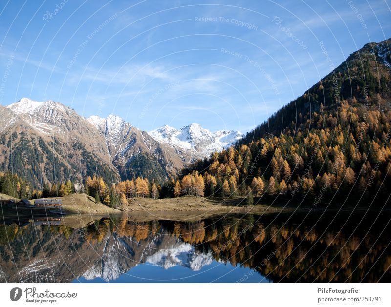 Sky Nature Water Blue White Tree Forest Autumn Environment Landscape Happy Lake Gold Exceptional Peak Individual