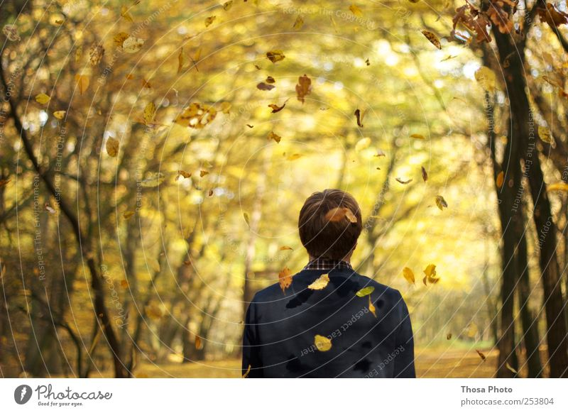 Human being Nature Tree Leaf Yellow Autumn Movement Gold Observe Idyll Serene Autumn leaves Autumnal Autumnal colours Automn wood Autumnal landscape