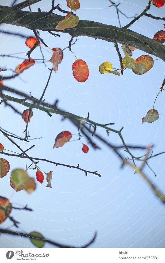 Sky Nature Tree Plant Leaf Yellow Autumn Environment Wood Air Line Climate Change Round Transience Branch