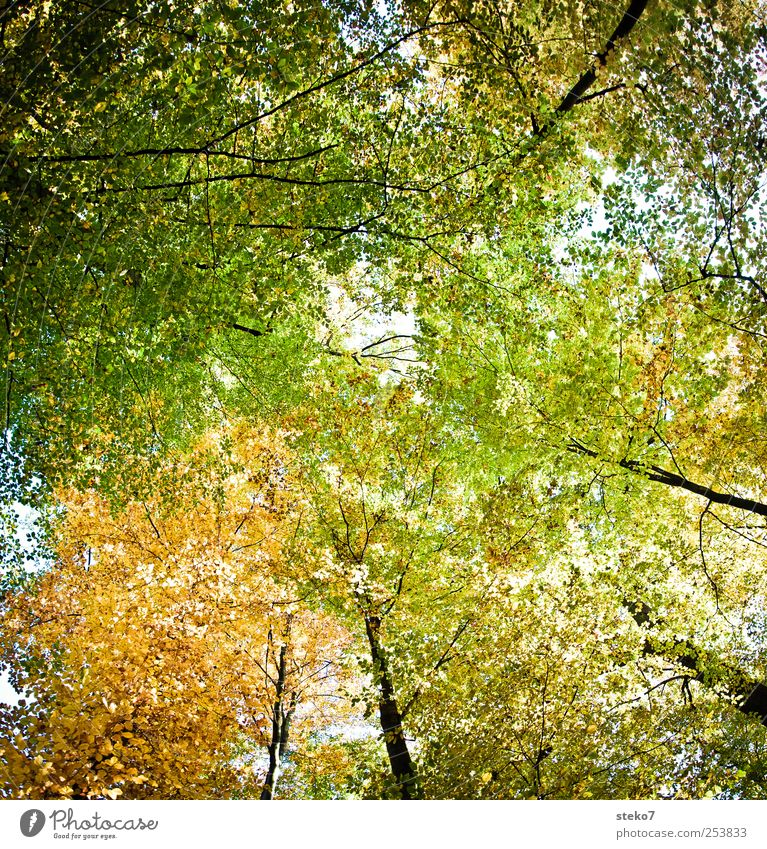 Green Tree Leaf Forest Yellow Autumn Treetop Deciduous forest Leaf canopy