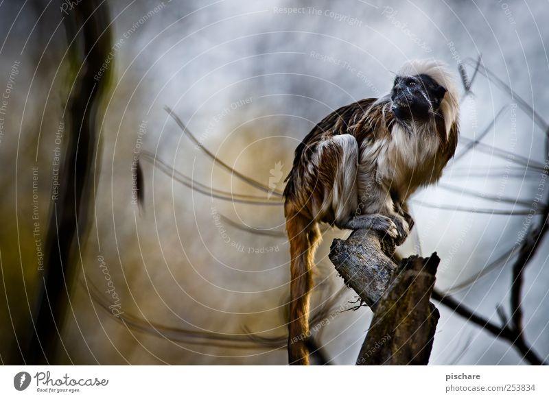 Nature Tree Animal Sit Wild Observe Curiosity Zoo Exotic Monkeys Timidity