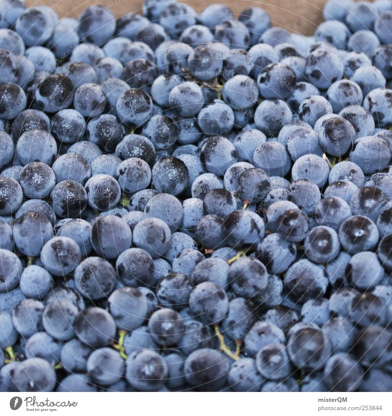 Blue Food Fruit Background picture Esthetic Vine Many Mature Berries Heap Bunch of grapes Grape harvest Wine growing Maximum