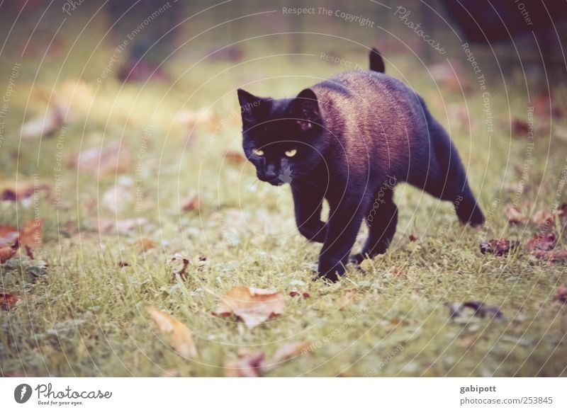 Black cat from the right Nature Landscape Meadow Animal Pet Cat Pelt 1 Baby animal Observe Movement Going Hunting Walking Beautiful Cuddly Cute Speed