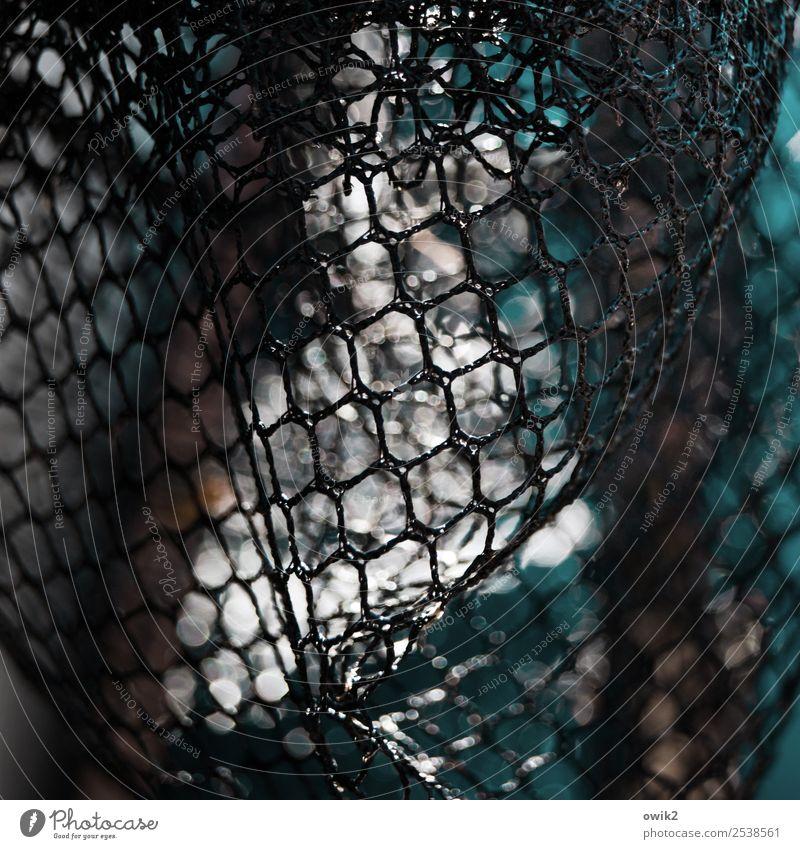 Mashebubu Landing net Net Reticular Loop Plastic Near Patient Unclear Delicate Flexible ductile Colour photo Subdued colour Exterior shot Close-up Detail