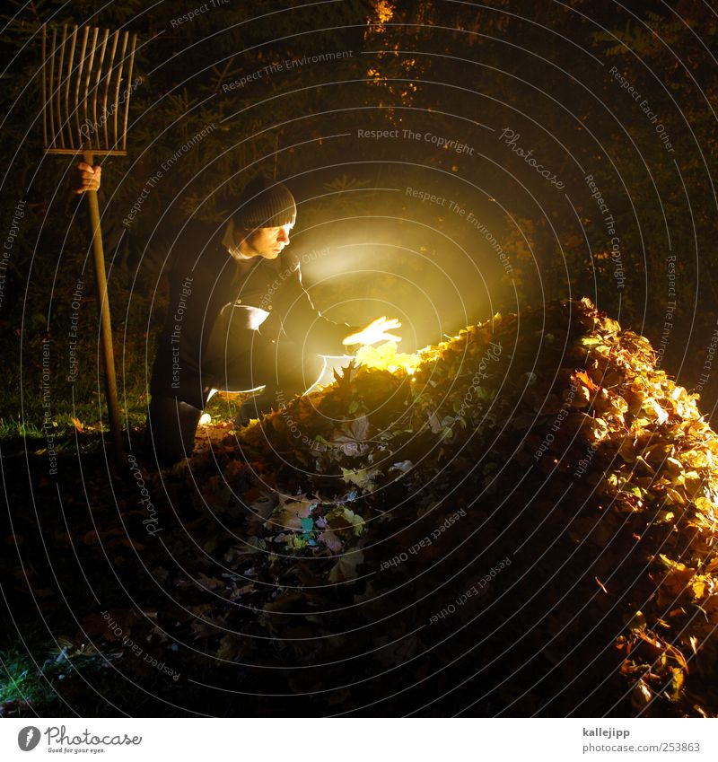 The gardener was it. Human being Masculine Man Adults 1 30 - 45 years Environment Nature Landscape Autumn Climate Fog Plant Tree Leaf Garden Park Meadow Forest