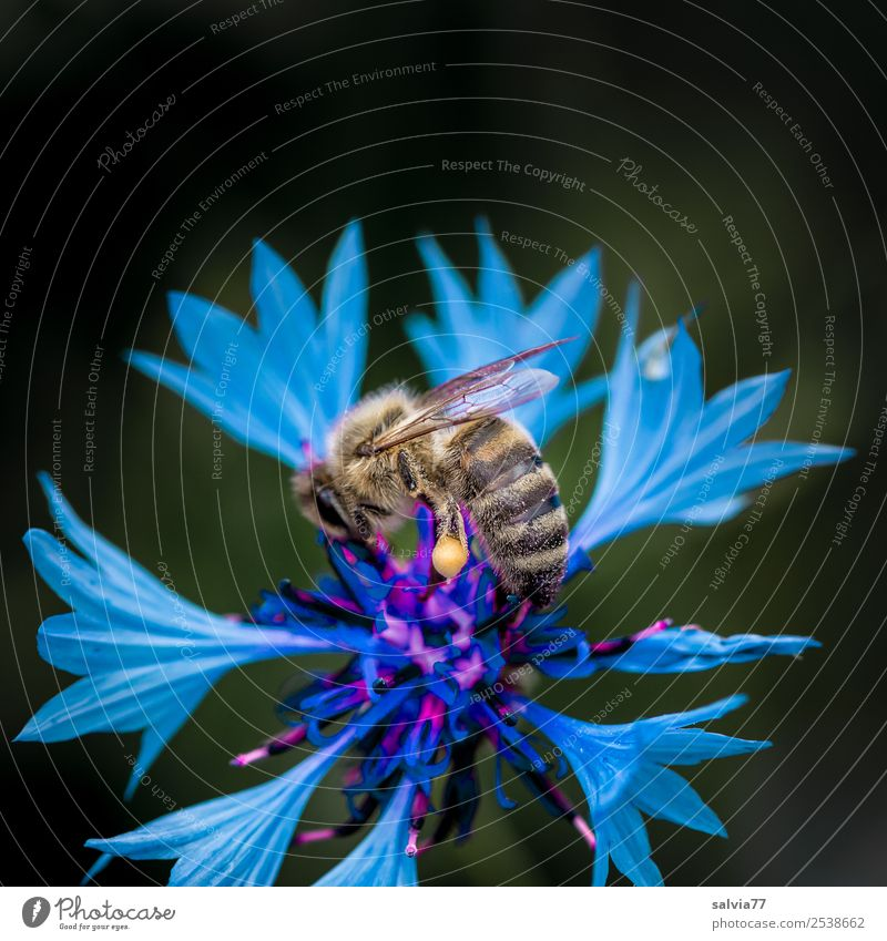 Nature Summer Blue Plant Colour Flower Animal Blossom Garden Field Esthetic Blossoming Insect Bee Fragrance Pollen