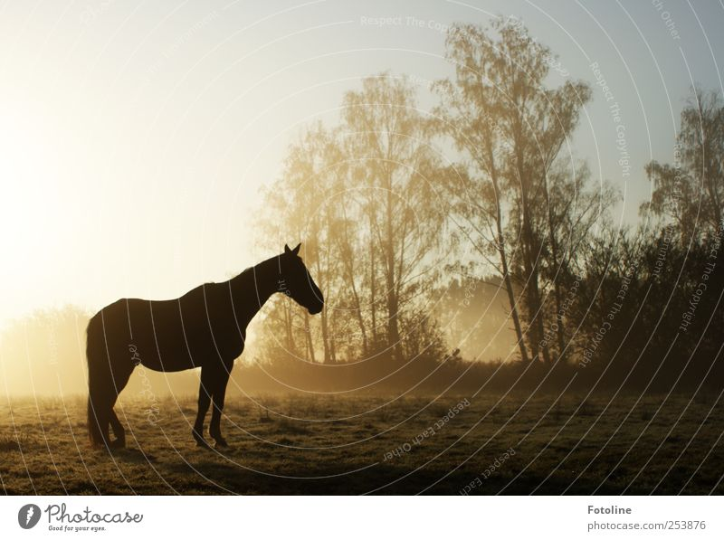 Giddap! Environment Nature Landscape Plant Animal Elements Earth Sky Cloudless sky Autumn Fog Tree Field Horse Bright Natural Colour photo Subdued colour