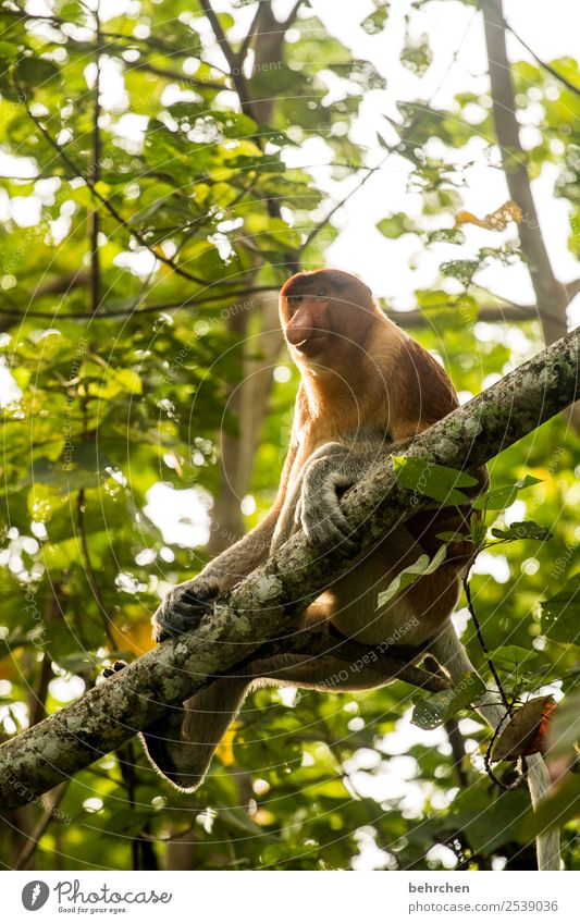 you should always have a good smell;) Vacation & Travel Tourism Trip Adventure Far-off places Freedom Nature Tree Forest Virgin forest Wild animal Animal face