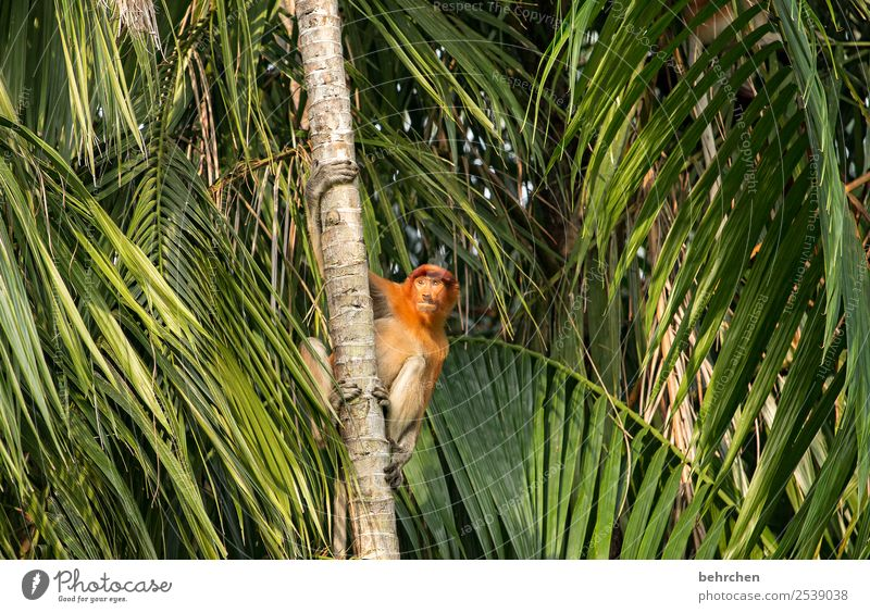 searching | FERNWEH Vacation & Travel Tourism Trip Adventure Far-off places Freedom Environment Nature Tree Leaf Palm tree Virgin forest Wild animal Animal face