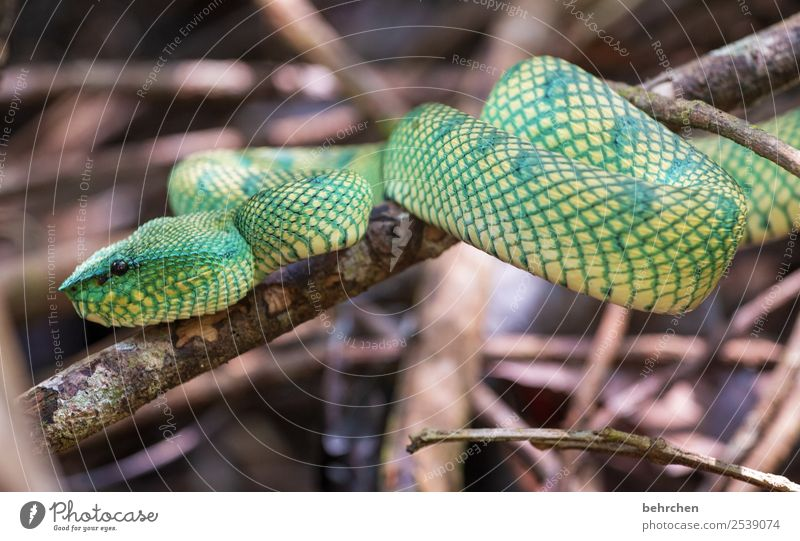 She's waiting for you. Vacation & Travel Tourism Trip Adventure Far-off places Freedom Virgin forest Wild animal Snake Animal face Scales Reptiles 1 Observe